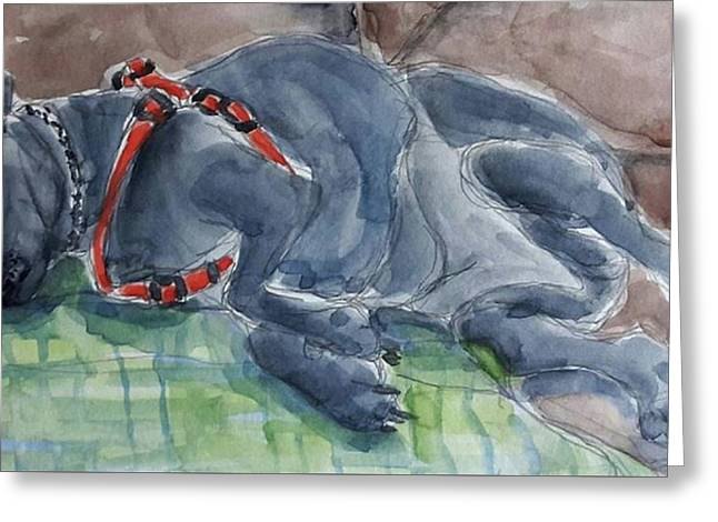 Rocky Napping Greeting Card by Janet Butler
