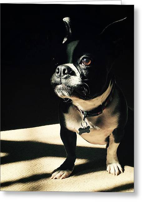 Greeting Card featuring the photograph Rocky by Sharon Jones