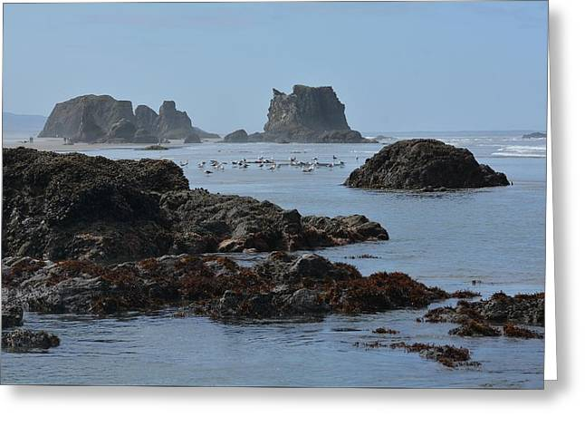 Rocky Shores 2 Greeting Card by Fraida Gutovich