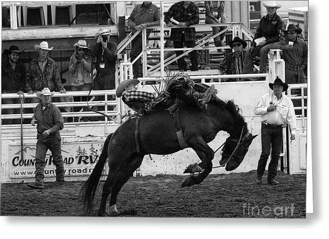 Rodeo Bareback Riding 3 Greeting Card