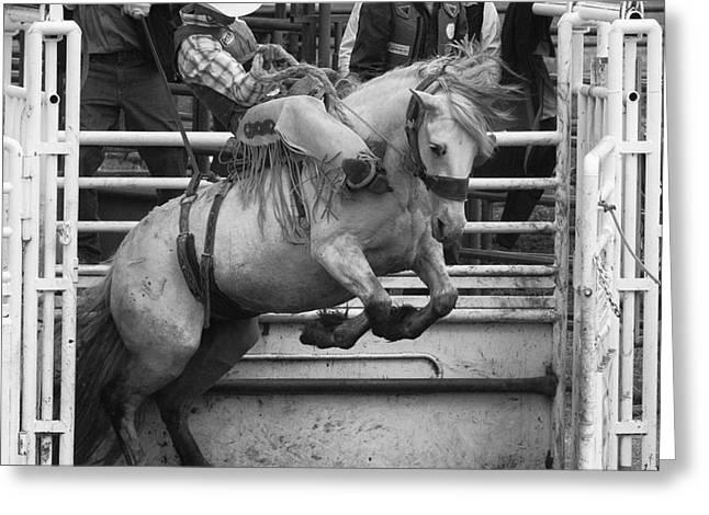 Rodeo Saddleback Riding 5 Greeting Card
