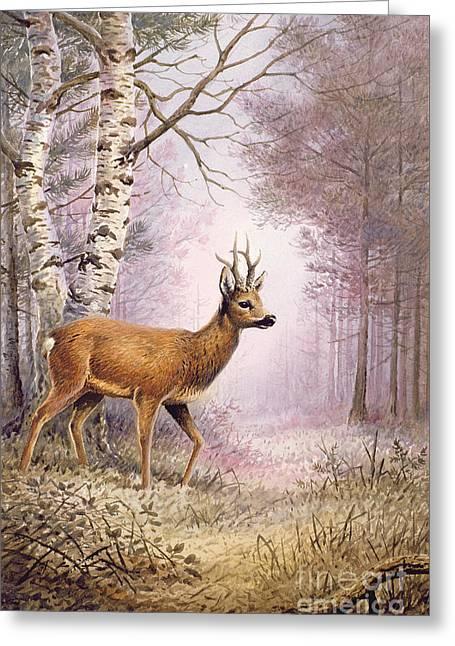 Roe Deer Greeting Card by Carl Donner