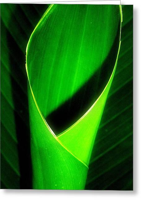 Rolled Canna Leaf Greeting Card by Beth Akerman