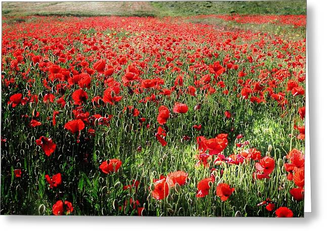 Rolling Fields With Poppies Greeting Card