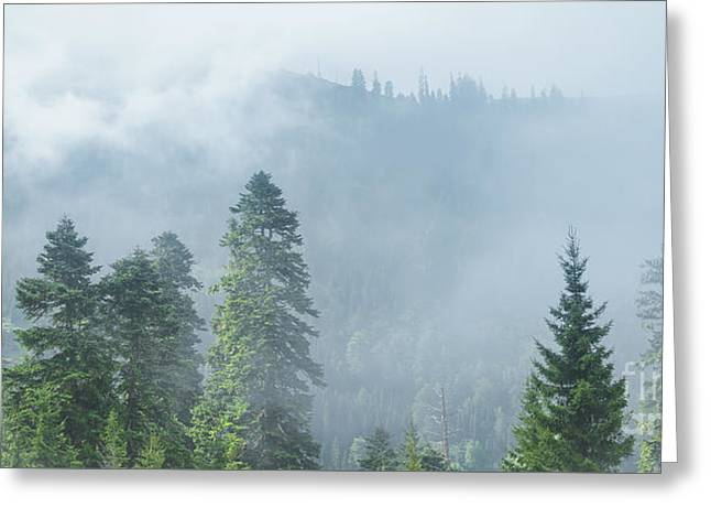 Rolling Fog Greeting Card by Svetlana Sewell