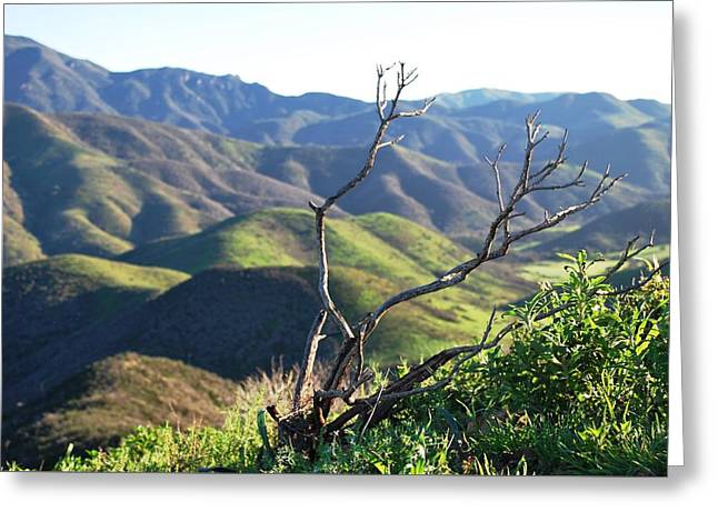 Greeting Card featuring the photograph Rolling Green Hills With Dead Branches by Matt Harang