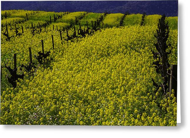 Rolling Hills Of Mustard Grass Greeting Card