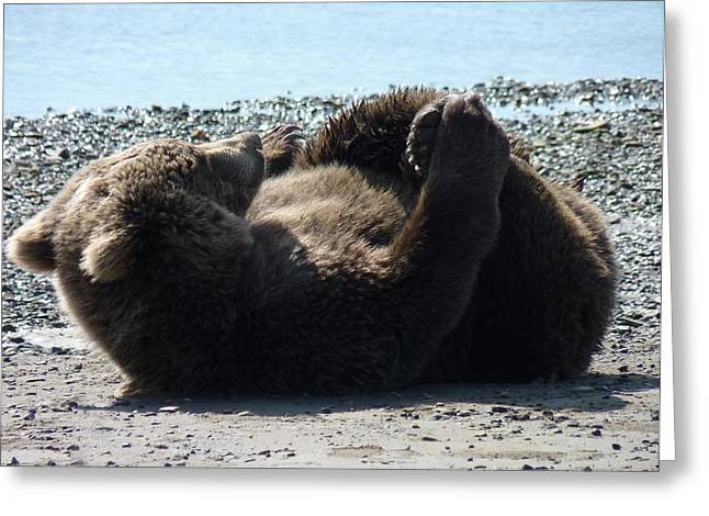 Rollover Beartoven Greeting Card by Dawna Raven Sky