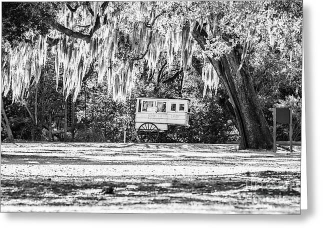 Roman Candy Cart Under The Oaks - Bw Greeting Card