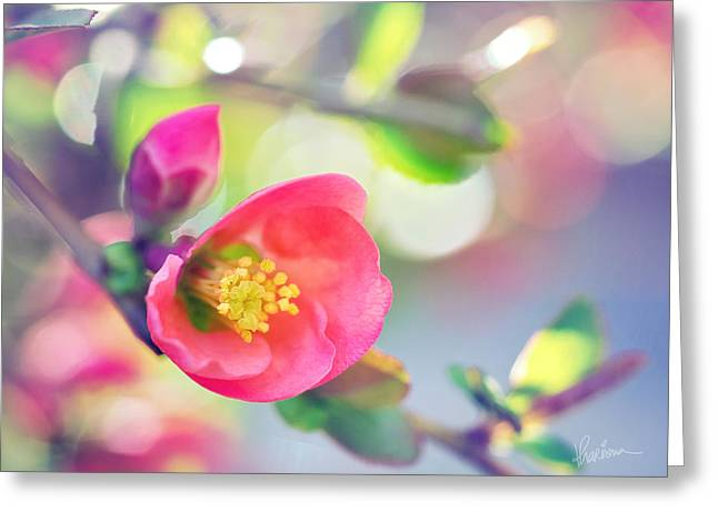 Romancing Spring I Greeting Card