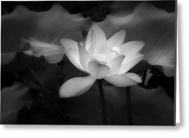 Romantic Lotus By Night Black And White Greeting Card
