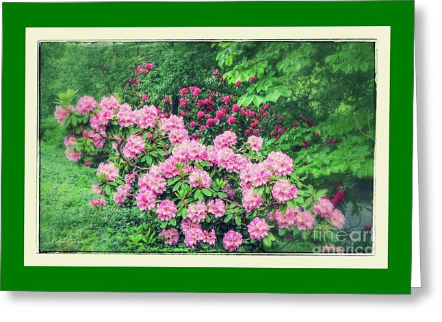 Romantic Rhododendrons Greeting Card