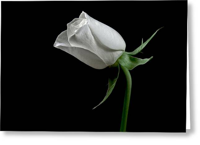 Romantic Rose Greeting Card by Elsa Marie Santoro
