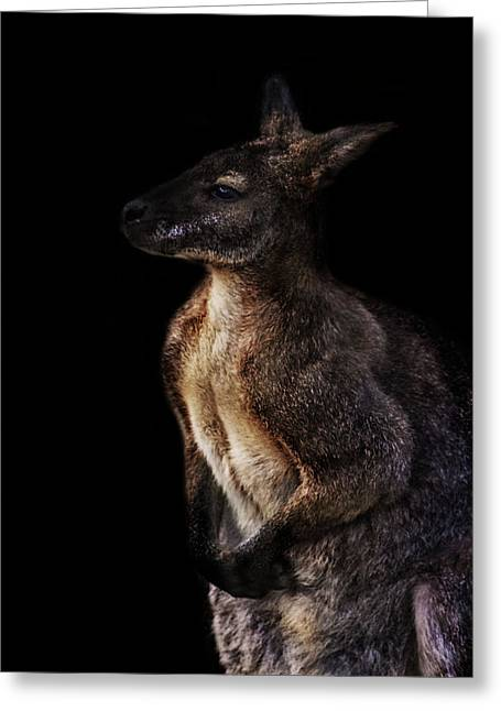 Roo Greeting Card by Martin Newman