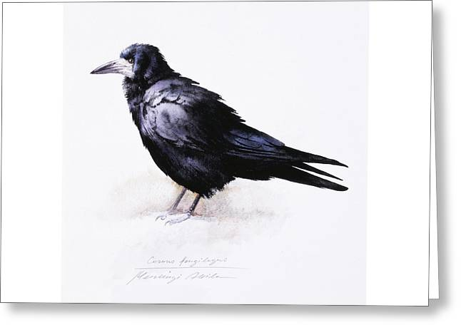 Rook Greeting Card by Attila Meszlenyi