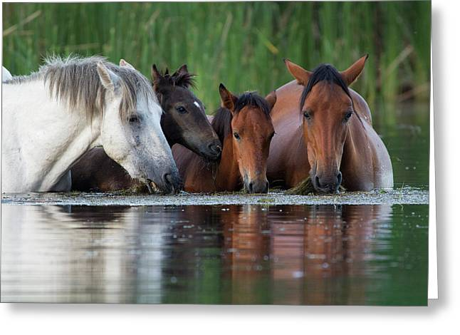 Room For All Greeting Card by Sue Cullumber