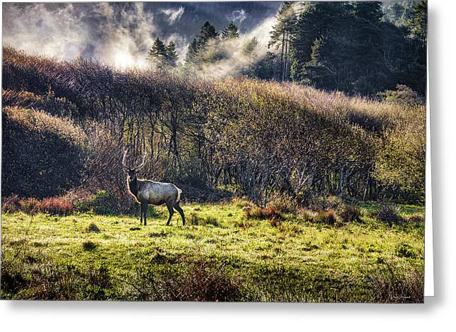 Greeting Card featuring the photograph Roosevelt Elk by Leland D Howard