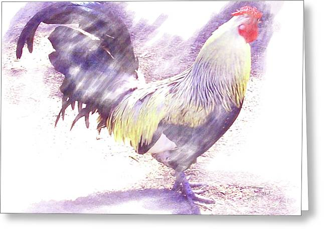 Rooster Purple Greeting Card by Barbara MacPhail