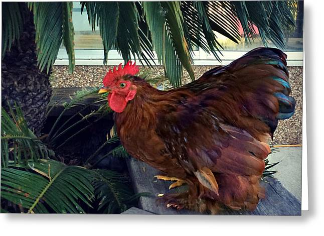 Rooster Under The Palm Greeting Card by Kathy M Krause