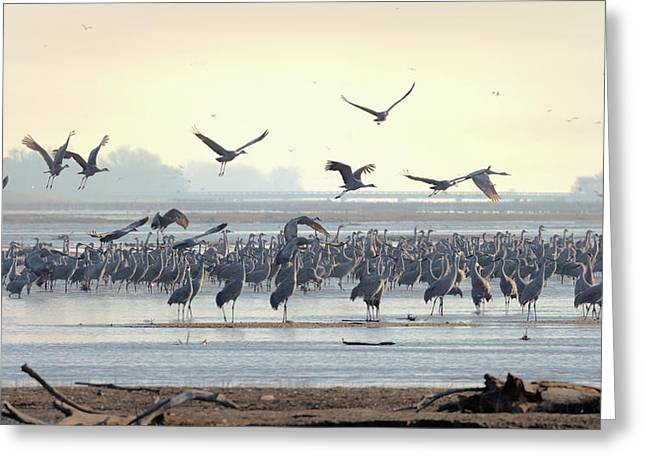 Roosting On The Platte Greeting Card
