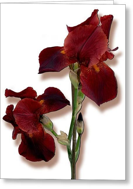 Root Beer Irises Greeting Card by Tara Hutton