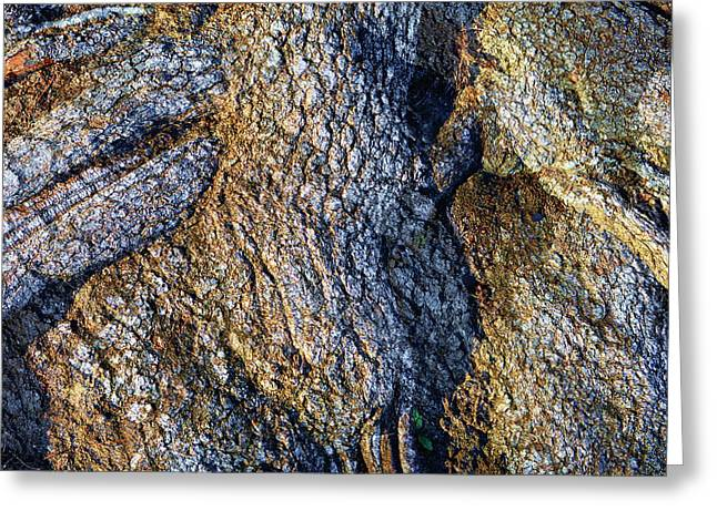 Greeting Card featuring the photograph Root Waves by Glenn McCarthy Art and Photography