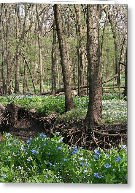 Rooted Bluebells Full Color Greeting Card by Dylan Punke