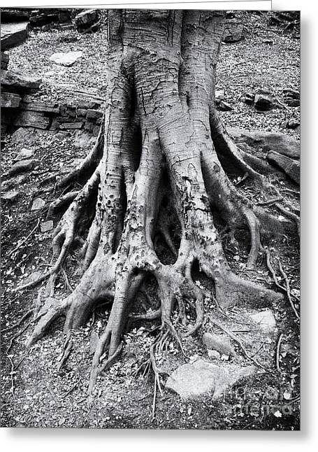 Rooted Greeting Card by Philip Openshaw