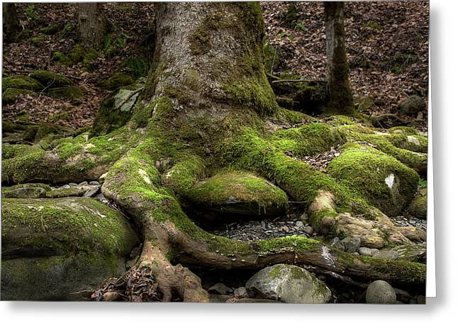 Roots Along The River Greeting Card by Mike Eingle