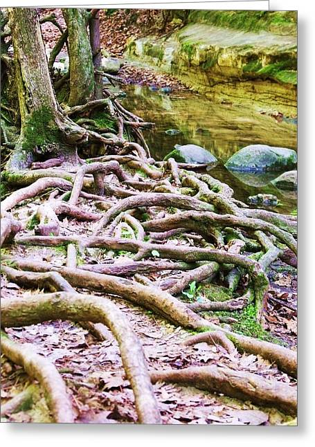 Roots And Rocks I Greeting Card by Anna Villarreal Garbis