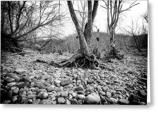Greeting Card featuring the photograph Roots And Stones by Alan Raasch