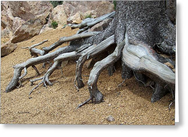 Roots Greeting Card by Ernie Echols