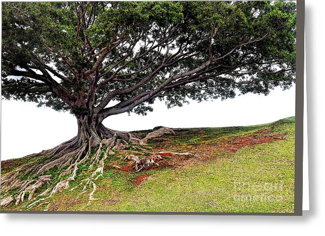 Roots Of Honolulu Greeting Card by Gina Savage