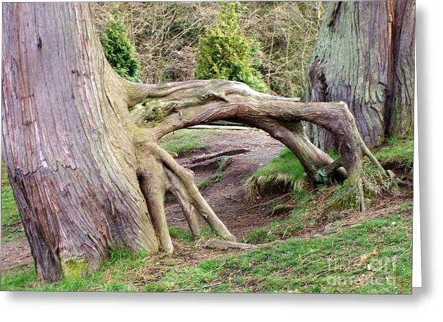 Greeting Card featuring the photograph Roots Of Strength by Mary Mikawoz