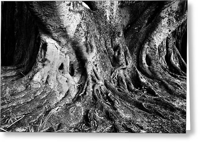 Roots Of The Banyan Greeting Card by David Lee Thompson