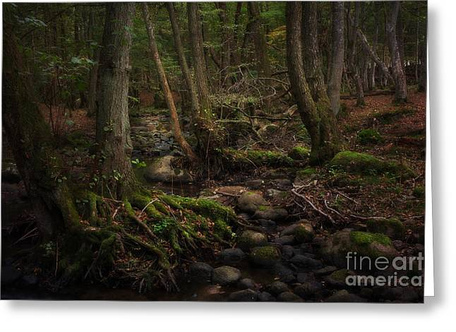Roots Greeting Card by Rikard Strand