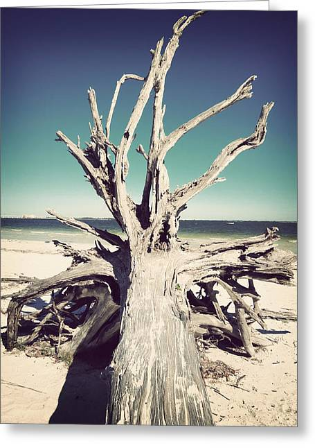 Tropical Beach Greeting Cards - Roots to the Sky-Vintage Greeting Card by Chris Andruskiewicz