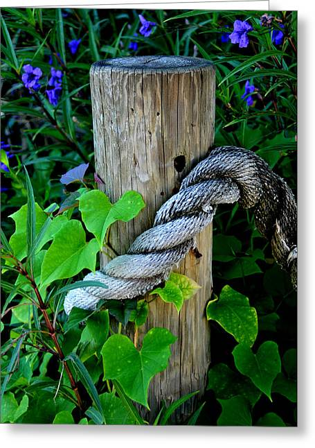 Rope And Vine Greeting Card by Lyle  Huisken