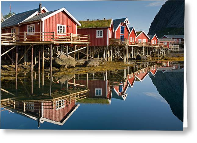 Rorbus With Reflections Greeting Card