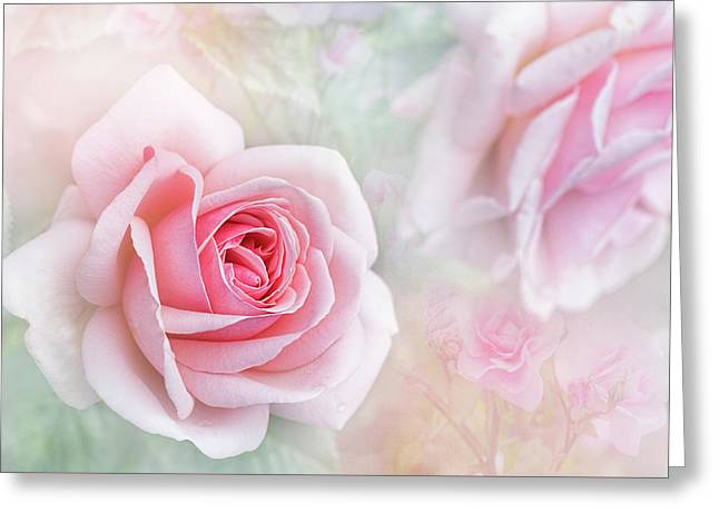 Rosa 'aphrodite' Greeting Card by Jacky Parker