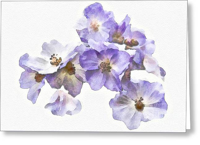 Rosa Canina - Watercolour Greeting Card