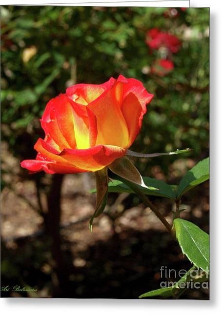 Rose 05 Greeting Card
