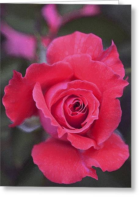 Rose 160 Greeting Card