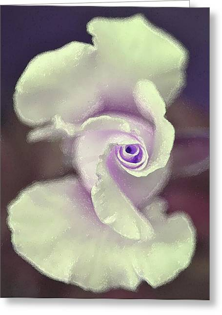 Rose 164 Greeting Card by Pamela Cooper