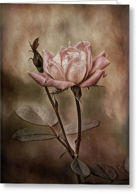 Rose 3 Greeting Card