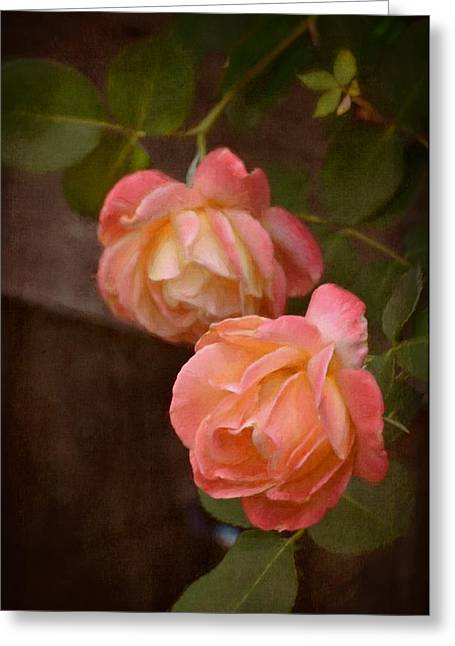 Rose 339 Greeting Card by Pamela Cooper