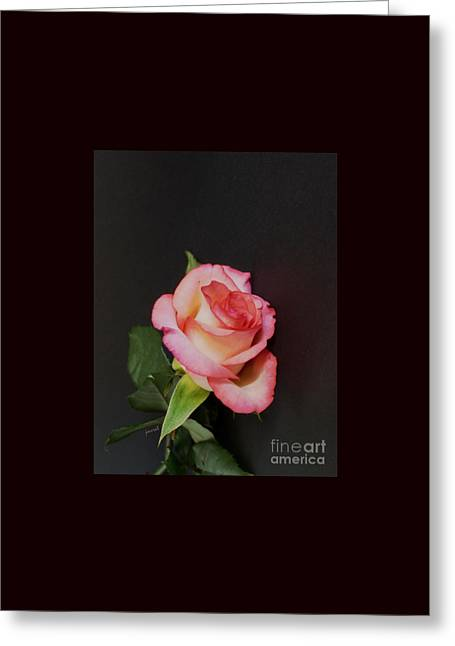 Geneve Rose M1 Greeting Card by Johannes Murat