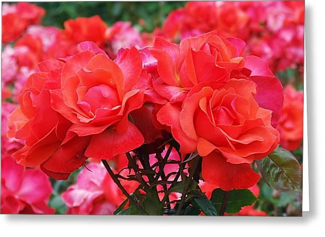 Rose Abundance Greeting Card by Rona Black