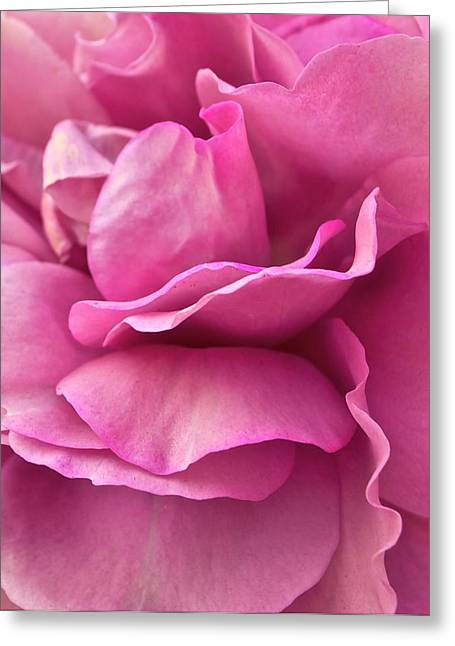 Rose Affair Greeting Card