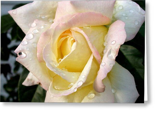 Greeting Card featuring the photograph Rose And Raindrops by Cynthia Lassiter